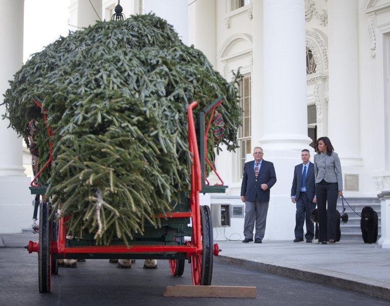 white house tree arrives 1