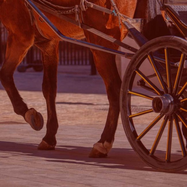 Hunt Country Wedding Transportation